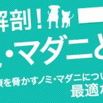 ノミ・マダニ駆除薬 徹底比較!