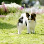 ご存知ですか?ペットもかかる花粉症…!