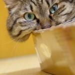 猫の肥満についてのお話。