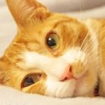 ペットの目のケアに役立つ商品のご紹介
