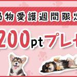 速報!ポイント贈呈キャンペーン開催!(9/20~9/26)