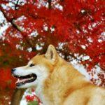 紅葉シーズン目前!ペット同伴で行ける観光スポットをうさパラスタッフがピックアップ♪