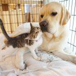 新しい家族のもとで幸せいっぱい♪元保護犬・猫ちゃんたち♪