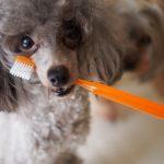 【獣医師監修】歯磨きできている飼い主はわずか2%?!歯ブラシ要らずのペットのデンタルケア