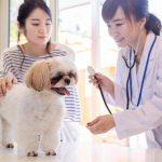 ペットに年間いくら使ってる? 健康関連の支出は増加傾向?!