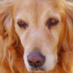 補助犬=盲導犬、だけではない!犬のすごいサポート能力とは