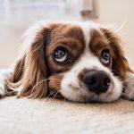ペットの写真をスマホで上手く撮る6つのポイント
